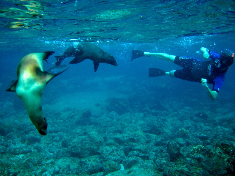 Snorkeling with some playful sea lions in the Galapagos Islands.