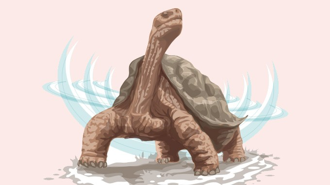 Lonesome George giant tortoise.