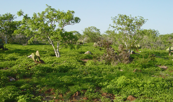 Vegetation of the Galapagos Islands.