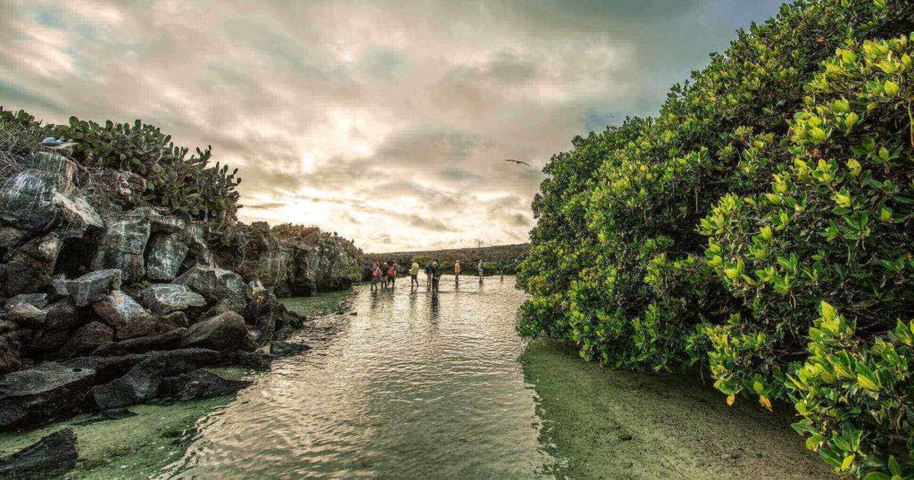 Genovesa island: Darwin Bay