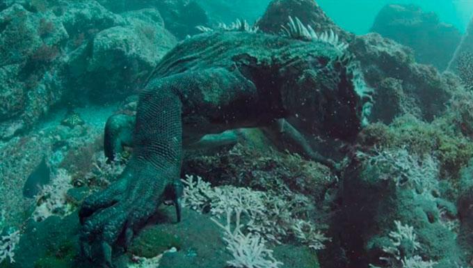 Galapagos islands marine life: marine iguanas