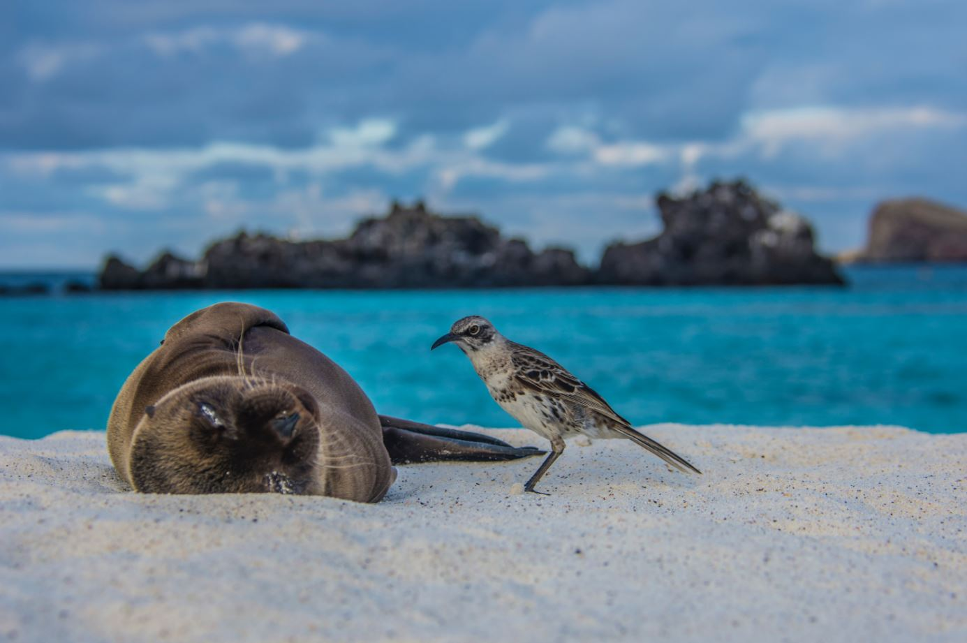 Sea lion and bird at Galapagos Islands' shore.