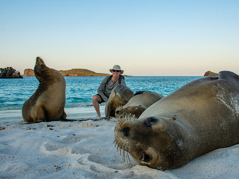 Group of sea lions resting on Gardner Bay
