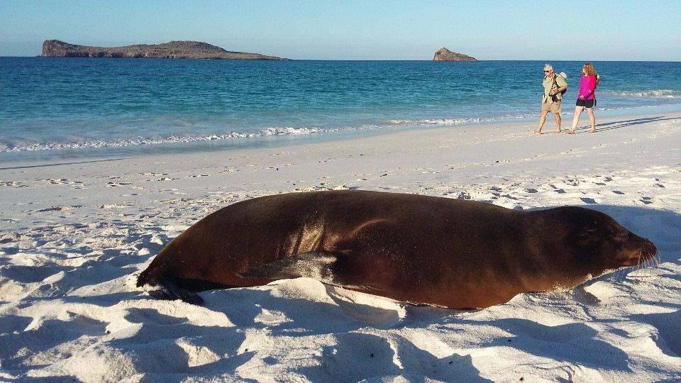 Galapagos beaches: gardner bay