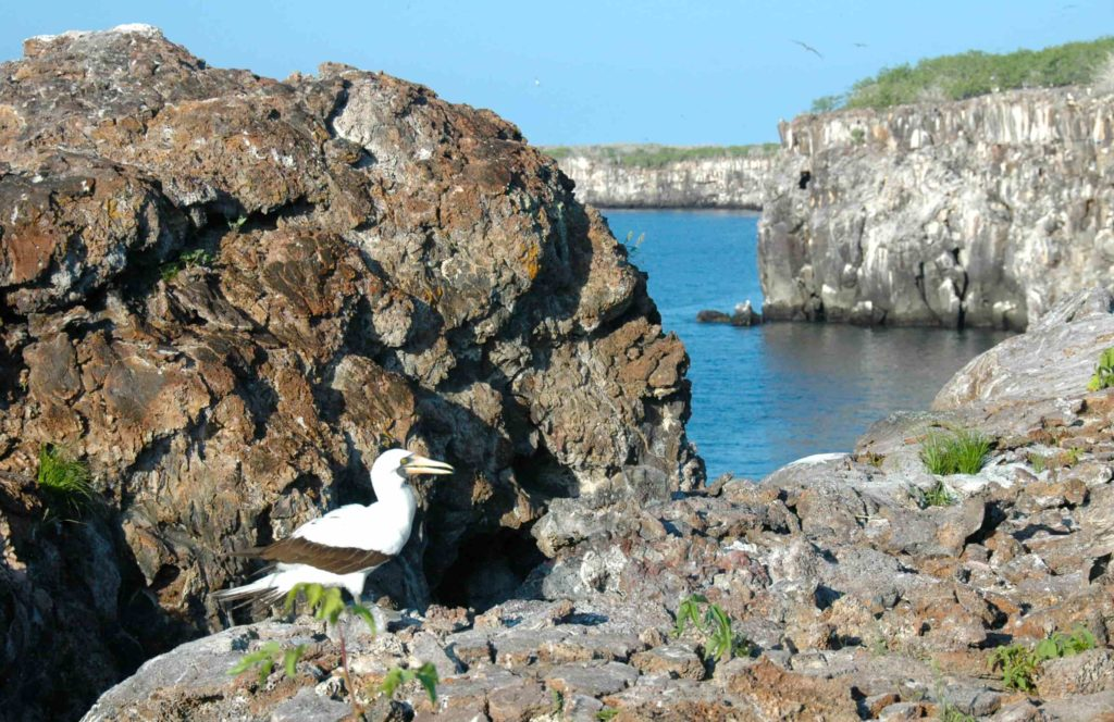 Galapagos islands: Genovesa Island
