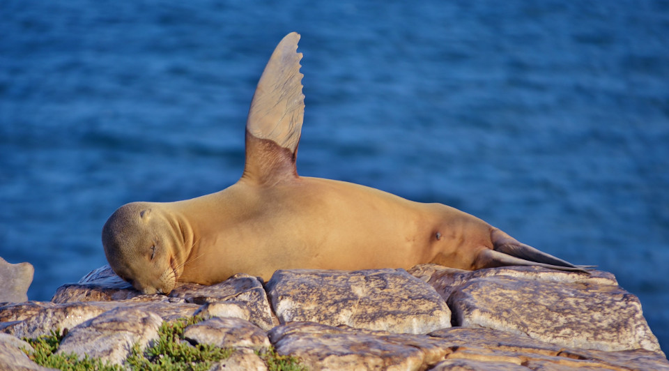 Sea lion from the Galapagos Islands
