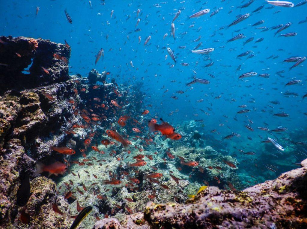 Galapagos fauna: fish