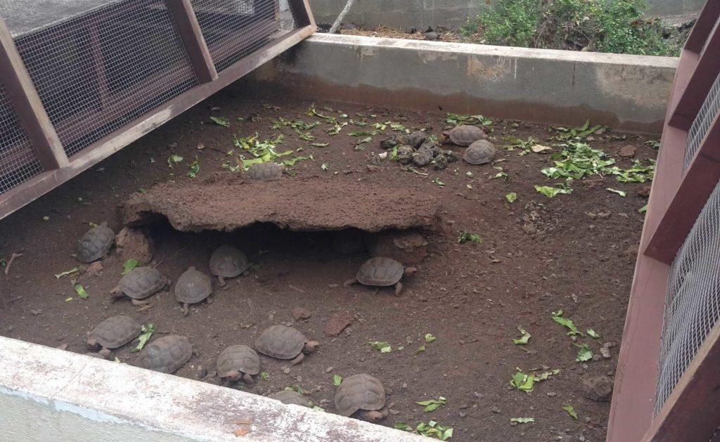 Galapagos Islands breeding center
