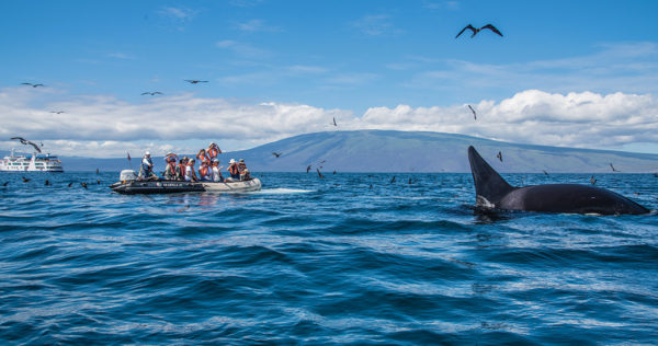An orca sighting near a panga ride.