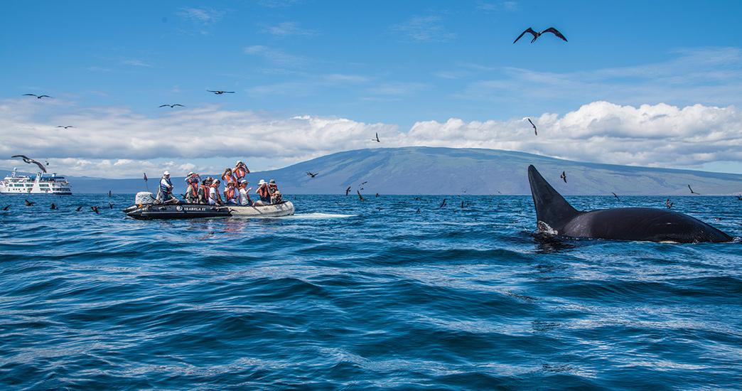 An orca sighting near a panga ride.