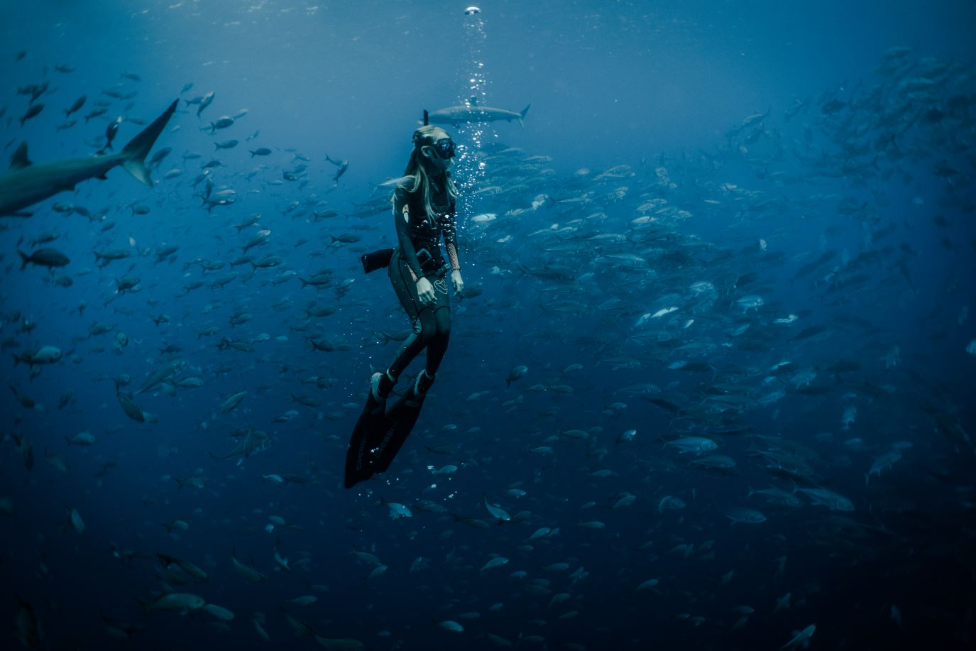 Snorkeling with fish in the Galapagos Islands.