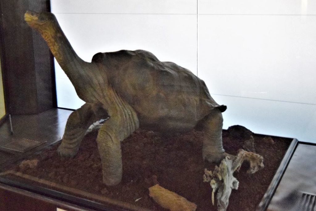 Lonesome George's remains