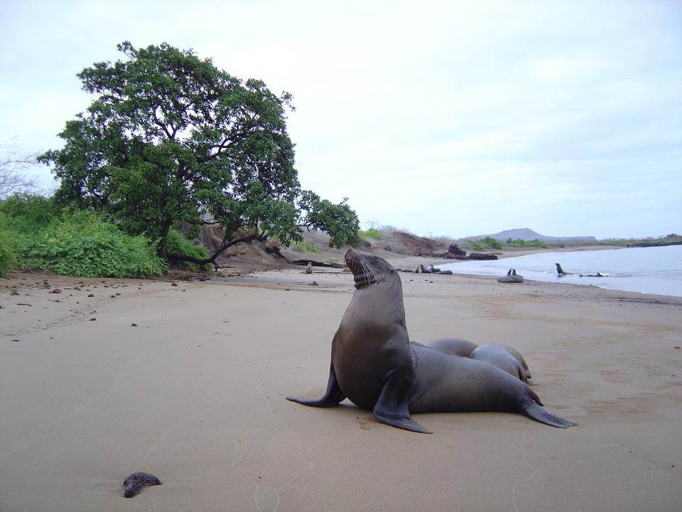 Sea lion at Cormorant Point.