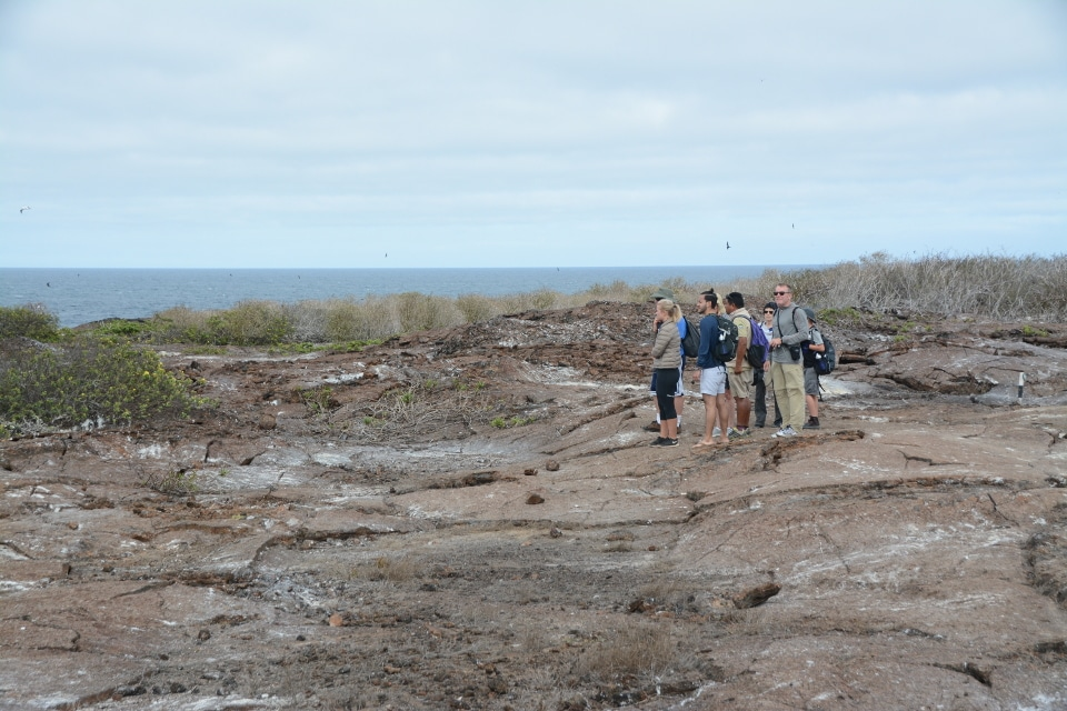 Looking for the Galapagos short-eared owl on Genovesa Island.