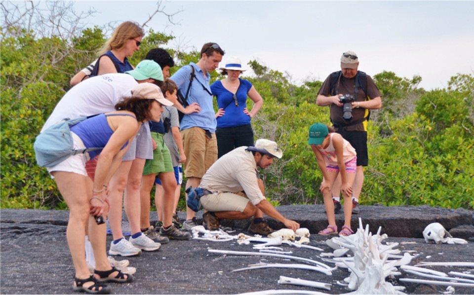 Understanding extinction in the Galapagos Islands.
