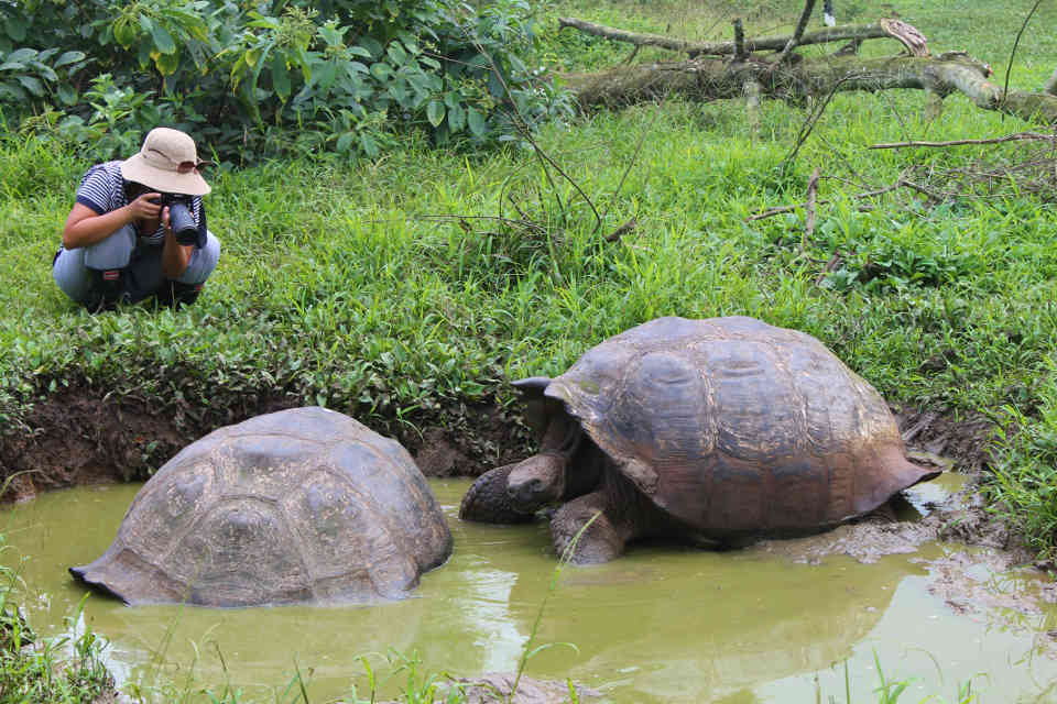 Guest taking photos of some Galapagos giant tortoises.