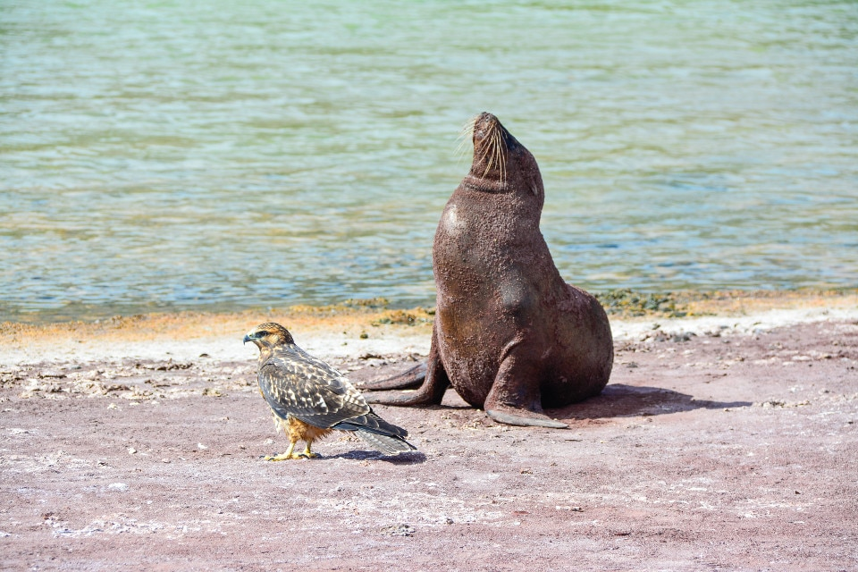 Predator and prey in Galapagos.