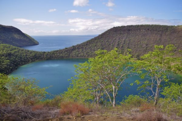 Tagus Cove is a visitor site on Isabela Island.