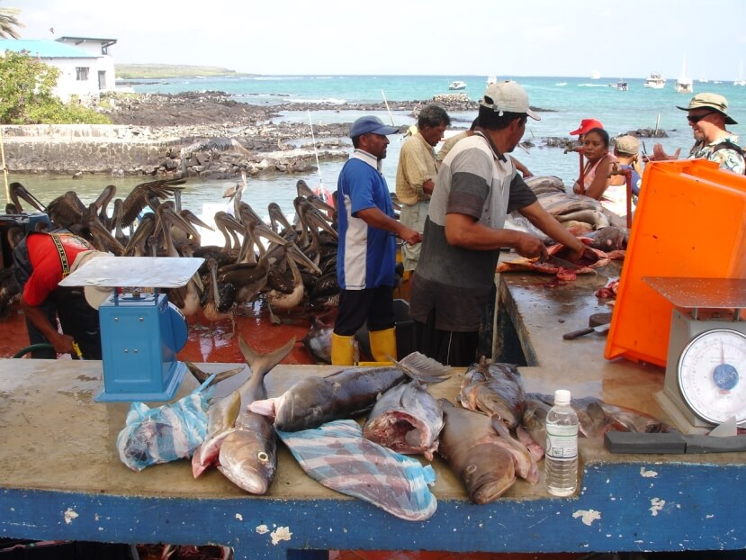 Fish market on Santa Cruz Island in Galapagos.