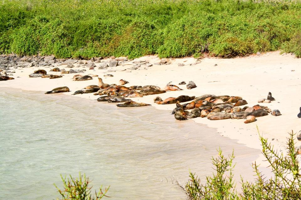 A colony of sea lions.