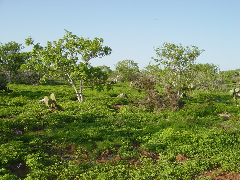 Galapagos vegetation during the hot season.