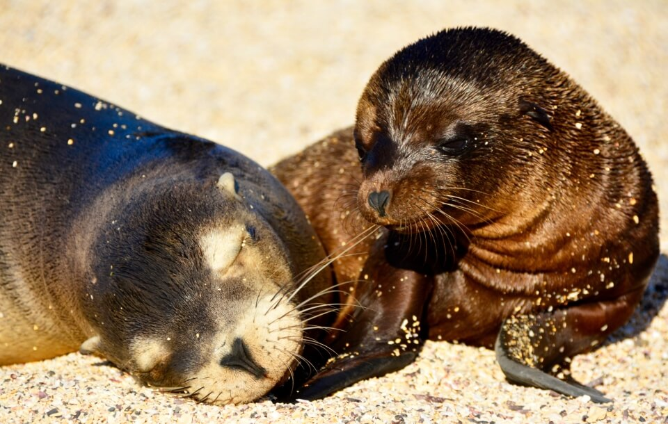 Sea lion pups resting on the sand.