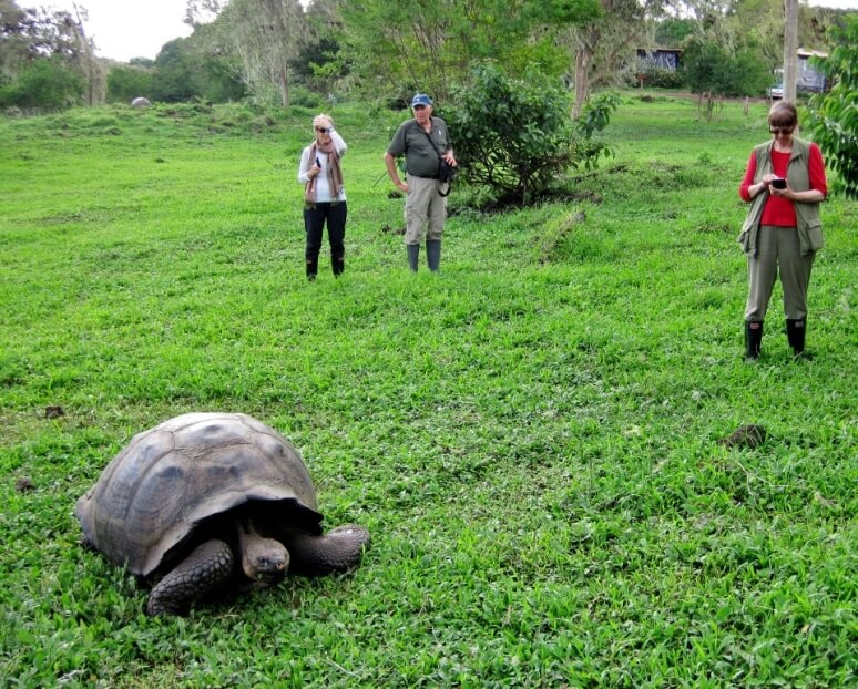 Santa Cruz II's guests hanging out with giant tortoises at El Manzanillo.