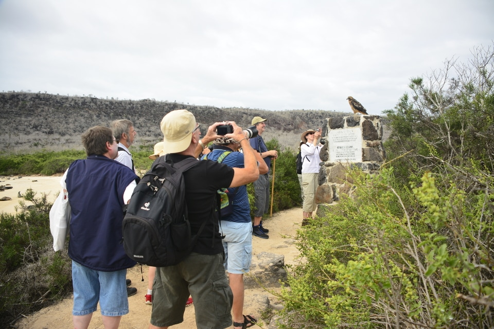 Visitors taking photos of a Galapagos hawk.