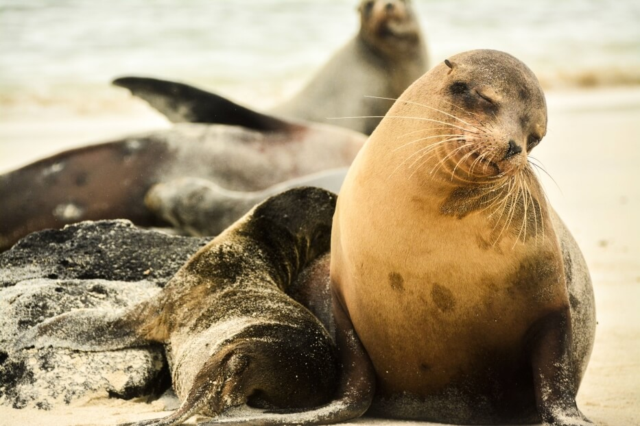 Sea lions found on Genovesa Island
