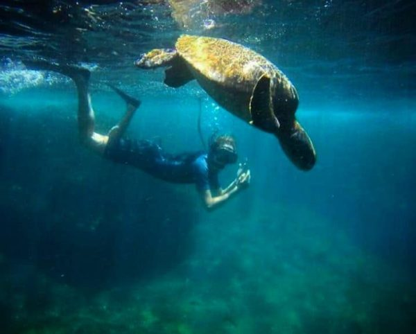 Snorkeling with sea turtles in Galapagos.
