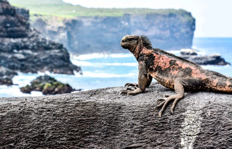Punta Suarez is one of the top visitor sites aboard Santa Cruz Galapagos Cruise.