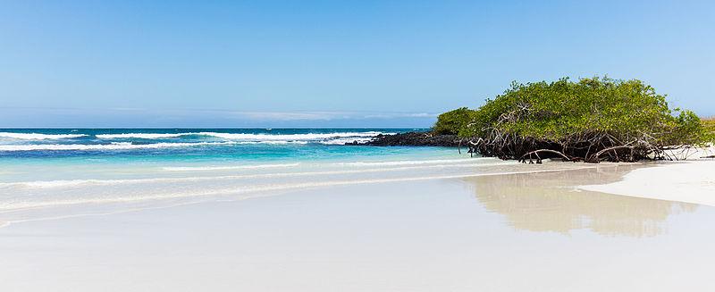 Tortuga Bay landscape.