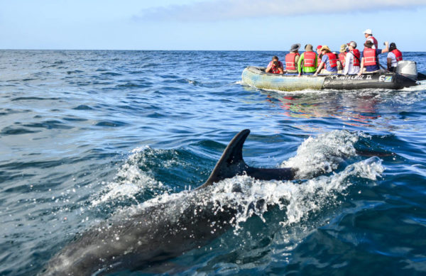 Dolphins encounter around Bartolome Island.