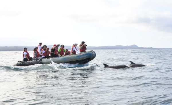 Santa Cruz's guests taking photos of some dolphins in Galapagos.
