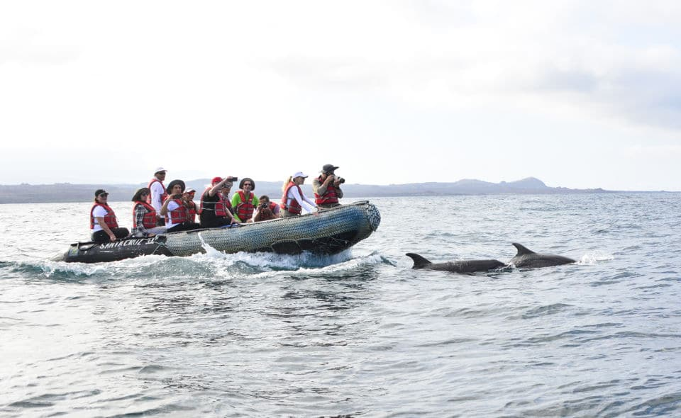 Santa Cruz's guests taking photos of some dolphins in Galapagos