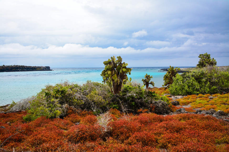 The colorful flora of South Plaza Island