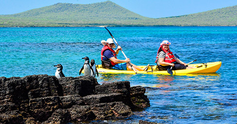 Kayaking and spotting Galapagos penguins around Fernandina Island.