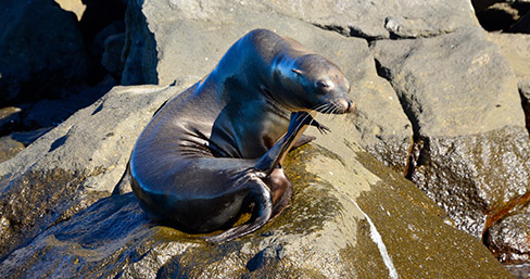 Sea lion basking under the sun on Baltra Island.