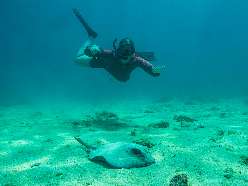 Snorkeling with a ray at Bartolome Island in Galapagos.