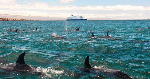Dolphins spotted in Galapagos.