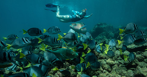 Snorkeling with the unique marine life of Galapagos.