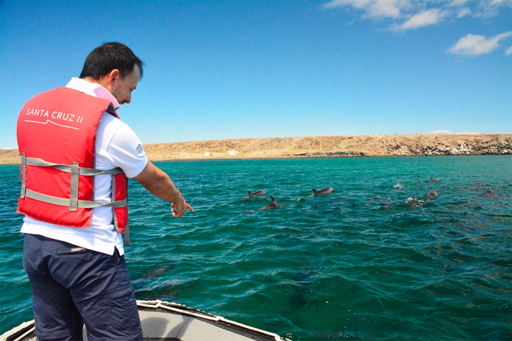 Dolphins spotted during a Panga ride on Baltra Island