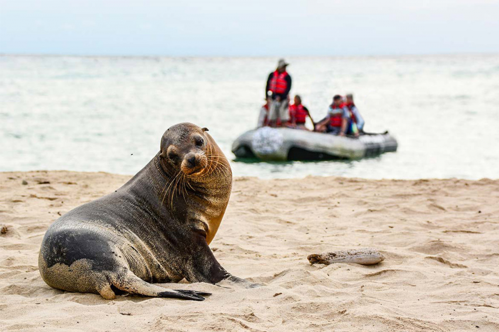 Galapagos sea lion spotted during a panga ride