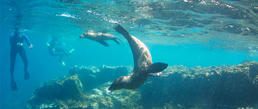 Snorkeling with sea lions in the Galapagos Islands