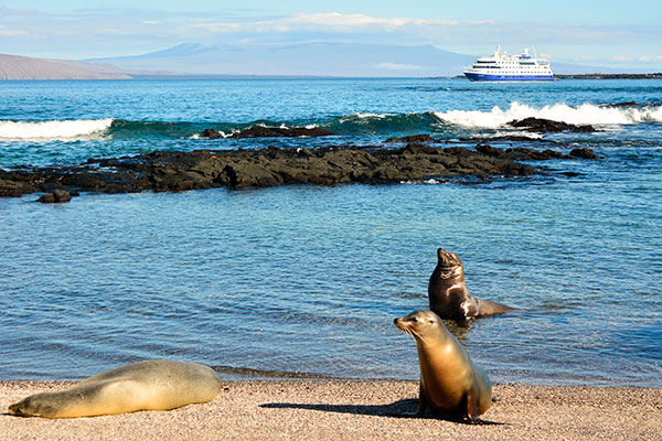 Sea lions seize the nice weather in Punta Vicente Roca in the Isabela Island, Galapagos