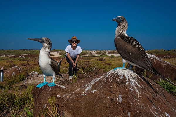 Blue footed boobies in North Seymour Island, Galapagos