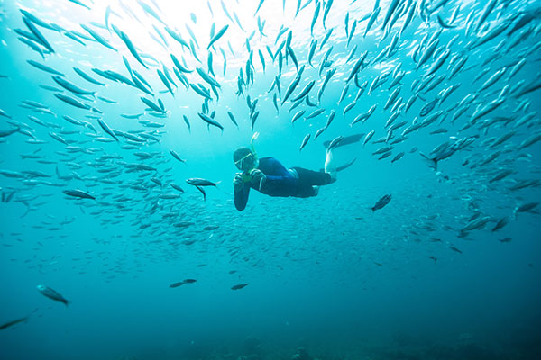 Snorkeling with a school of fish in Champion Islet at Floreana Island