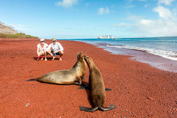 Sea Lions at Rabida Island's iconic red beach
