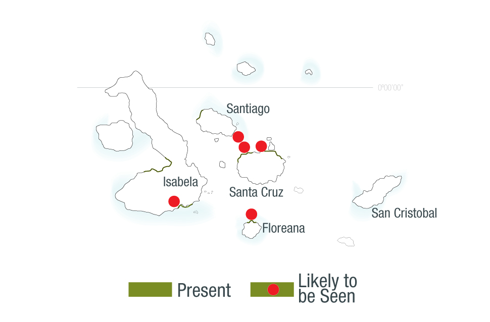 Map of locations of American Flamingos in the Galapagos Islands
